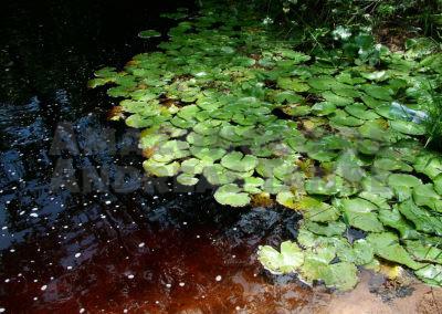 Schwarzwassercreek, Suriname