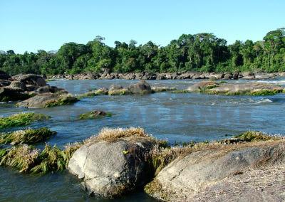 Zierfischimporte aus Brasilien – Gestern, heute, morgen