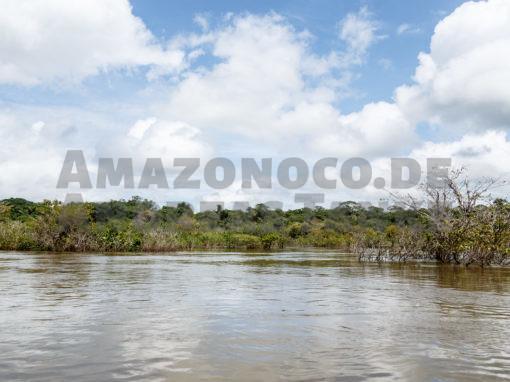 Biotopveränderungen am Rio Xingu (Cichliden)