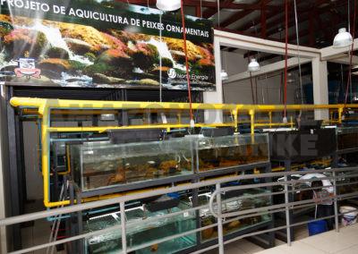 Zuchtanlage UFPA in Altamira am Rio Xingu