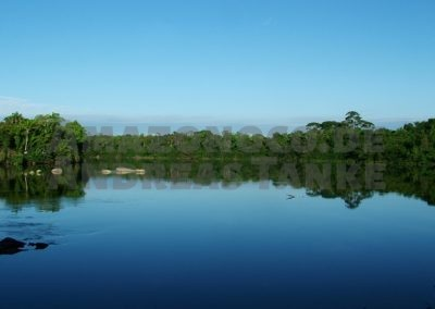 Die Harnischwelse Amazoniens