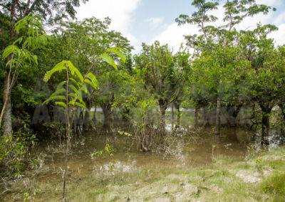 Überschwemmungsgebiet am Igarapé Tucurui