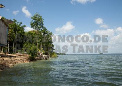 Fundort von Panaqolus tankei (L 398) im Oktober 2013 bei Niedrigwasser