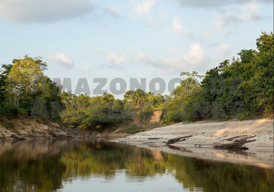 Perú – auf Zierfischsuche im amazonischen Tiefland
