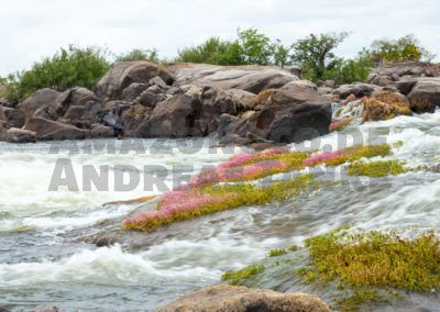 Cachoeira Grande do Rio Iriri