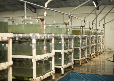 Hälterungsanlage: Stingray, Peru